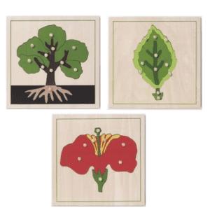 Biologischer Kartensatz